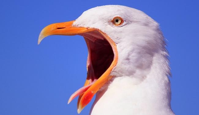 トランペットを吹くときの「舌」のセッティング<シラブル>とは?